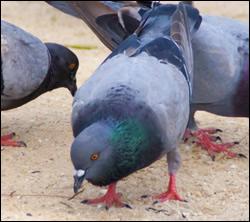 Citrus Park bird control