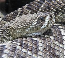 Citrus Park snake removal