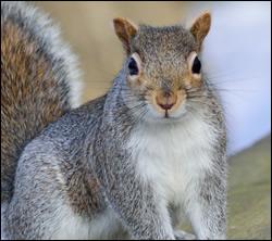 Citrus Park squirrel removal